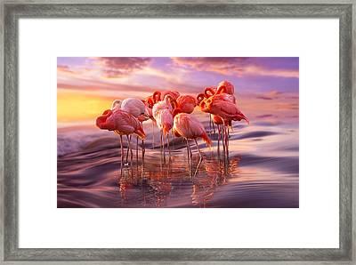 Flamingo Siesta Framed Print by Adrian Borda