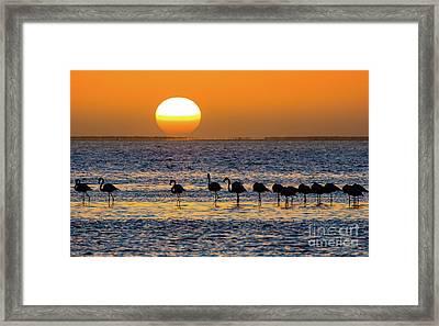 Flamingo Sunset Framed Print