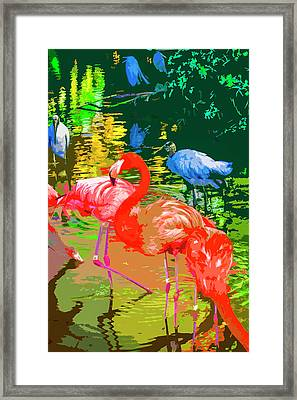 Flamingo Time Framed Print