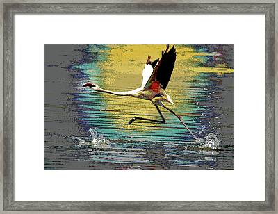 Flamingo Walking On Water Framed Print by Charles Shoup