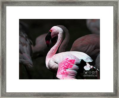 Flamingo Framed Print by Wingsdomain Art and Photography