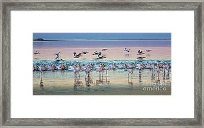 Flamingos And Pelicans Framed Print