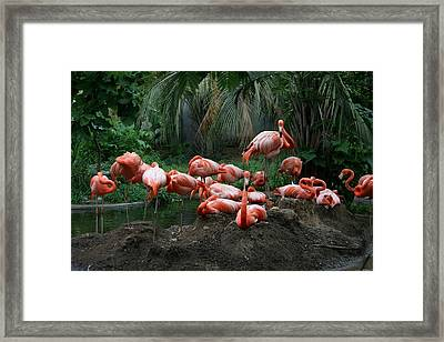 Framed Print featuring the photograph Flamingos by Cathy Harper