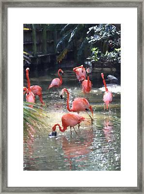 Flamingos Framed Print by Diane Merkle