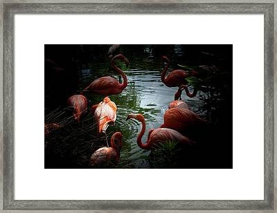 Framed Print featuring the photograph Flamingos by Eric Christopher Jackson