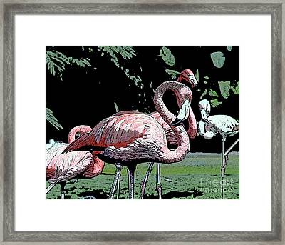 Framed Print featuring the photograph Flamingos I by Jim and Emily Bush