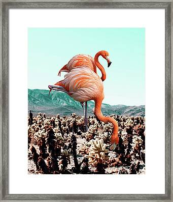 Flamingos In The Desert Framed Print