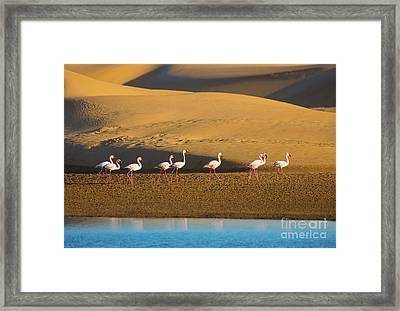 Flamingos In The Sand Dunes Framed Print