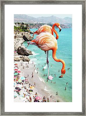 Flamingos On The Beach Framed Print
