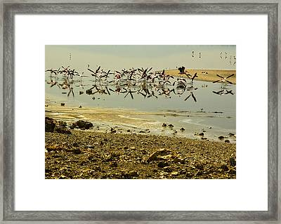 Flamingos Framed Print