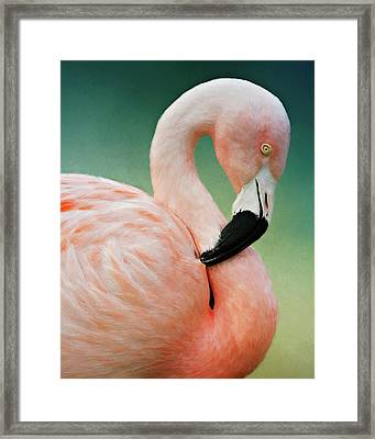 Flamingo's Portrait Framed Print