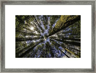 Flanked By Firs Framed Print by Wasim Muklashy