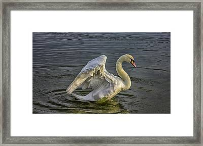 Flap Those Wings Framed Print by Martin Newman