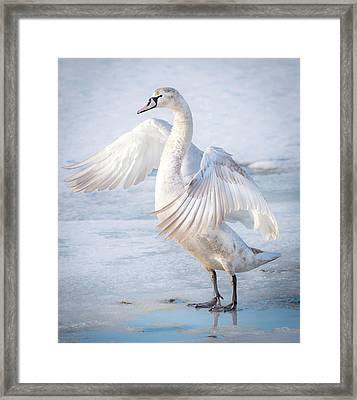 Flappin... Framed Print