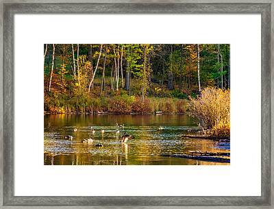 Flapping For Fall Framed Print
