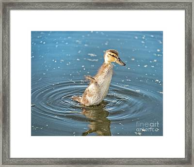 Flappy Duck Framed Print