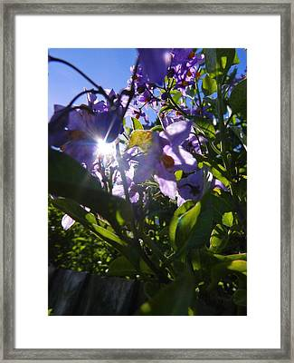 Flare For Flowers Framed Print by Nik Watt