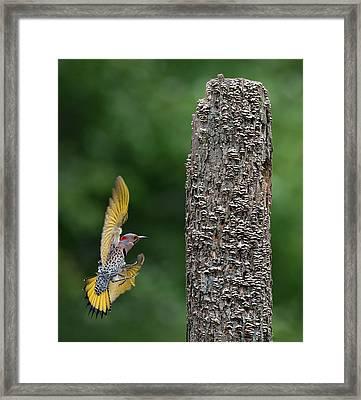 Flash Of Yellow Framed Print