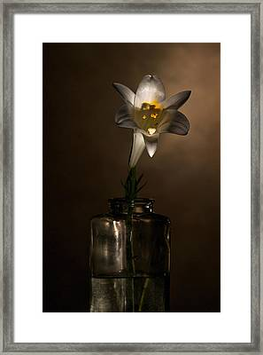 Flashlight Series Easter Lily 2 Framed Print