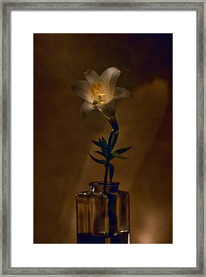 Flashlight Series Easter Lily 4 Framed Print