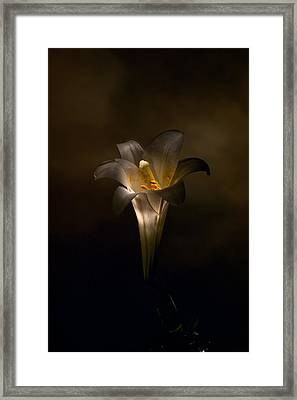 Flashlight Series Easter Lily 5 Framed Print