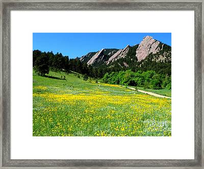 Flatirons And Yellow Meadow Framed Print