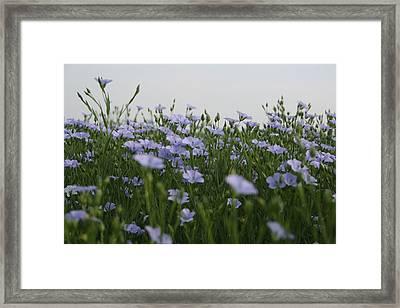 Flax V Framed Print