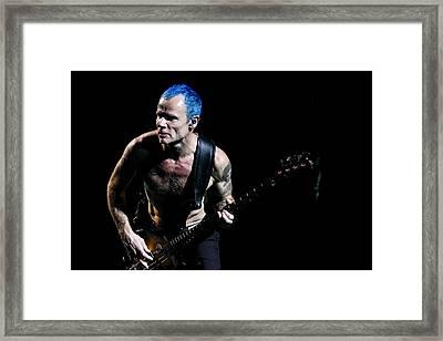 Flea Framed Print