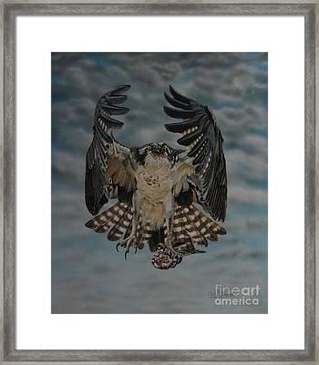 Fleck The Osprey  Framed Print