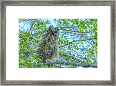 Fledgling Moment At Sundown Framed Print