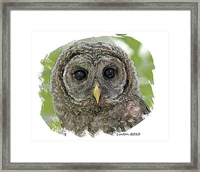 Fledgling Owl Framed Print by Larry Linton