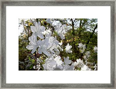 Framed Print featuring the photograph Fleeting Beauty by Chris Scroggins
