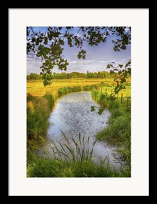 Lush Colors Framed Prints