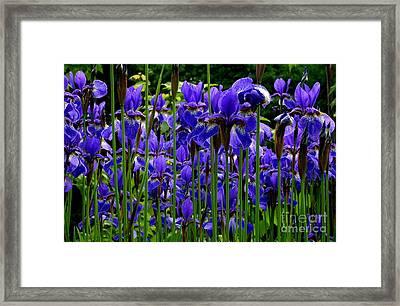 Fleur De Lys Framed Print