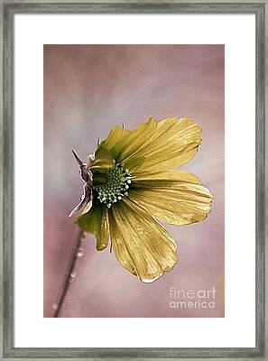 Fleurina 02 - 14b Framed Print by Variance Collections