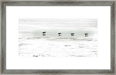 Flight - Sea Of Cortez Framed Print by Clyde Replogle