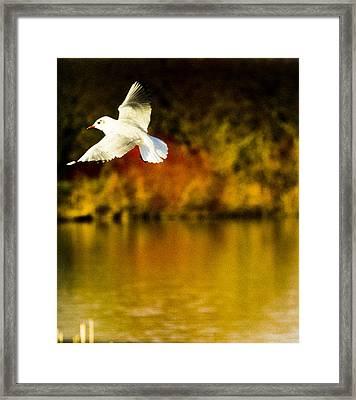 Flight Framed Print by Angela Aird