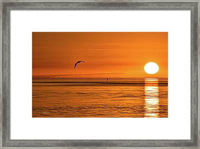 Flight At Sunset Framed Print by Christopher Holmes