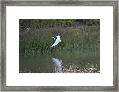 Framed Print featuring the photograph Flight by Carol  Bradley