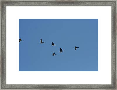 Flight Framed Print by Gregory Jeffries