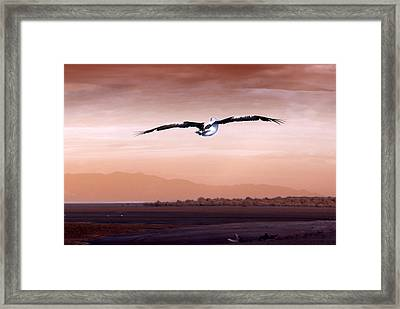 Flight Framed Print by Holly Kempe