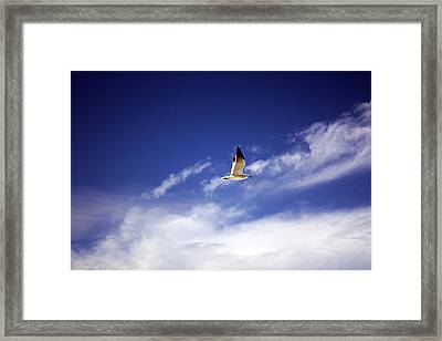 Flight In The Blue Sky Framed Print