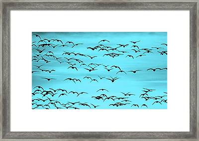 Flight In Turquoise Framed Print