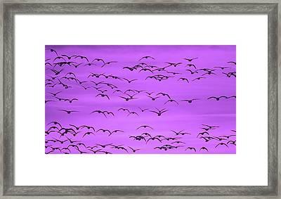 Flight In Ultra Violet Framed Print