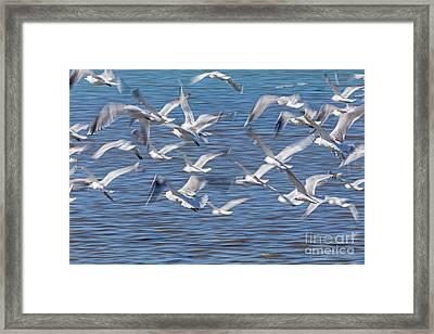 Flight Framed Print by Kate Brown