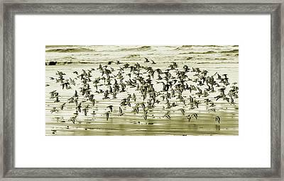 Flight Framed Print by Mary Jo Allen