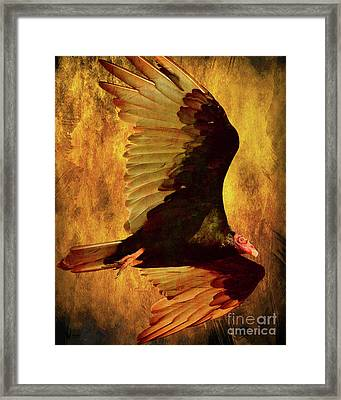 Flight Of A Vulture . Texture . 40d8879 Framed Print by Wingsdomain Art and Photography
