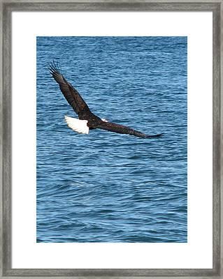 Flight Of An Eagle  Framed Print