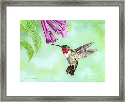 Flight Of Fancy Framed Print by Sarah Batalka