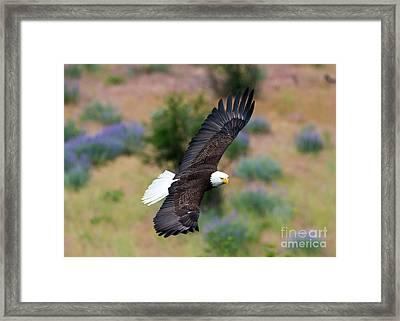 Flight Of Spring Framed Print by Mike Dawson
